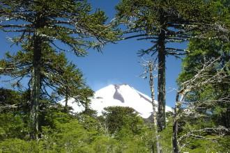 Parque Nacional Conguillio y volcán Llaima, Chile
