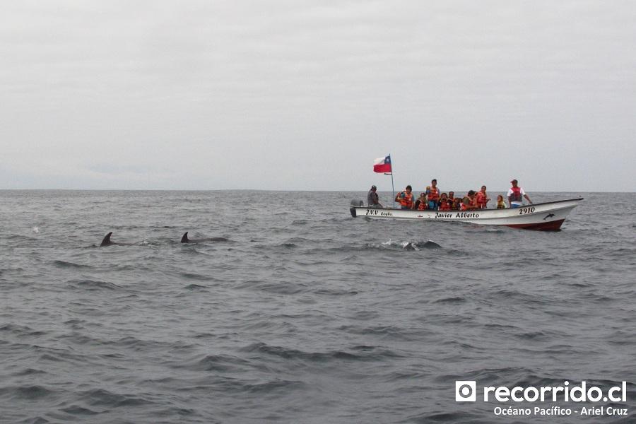 delfines - javier alberto - embarcación - isla damas - ecoturismo la serena