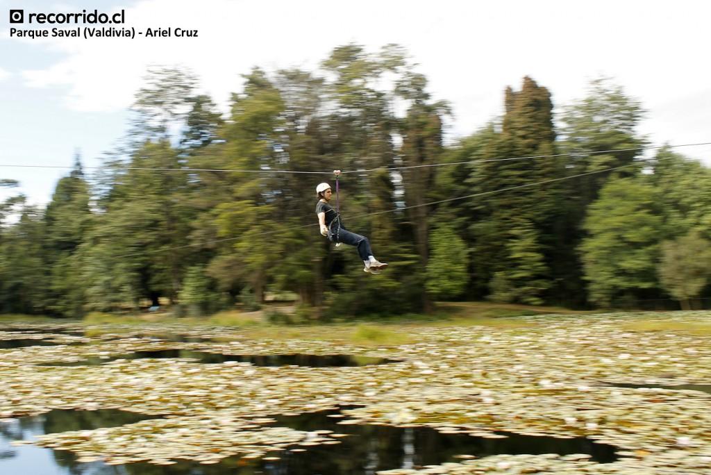 barrido - parque saval - canopy - valdivia