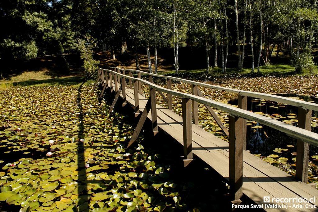 parque saval - laguna de lotos