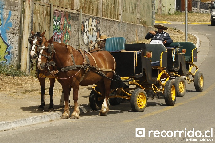 pichilemu - carruajes - caballos - pch