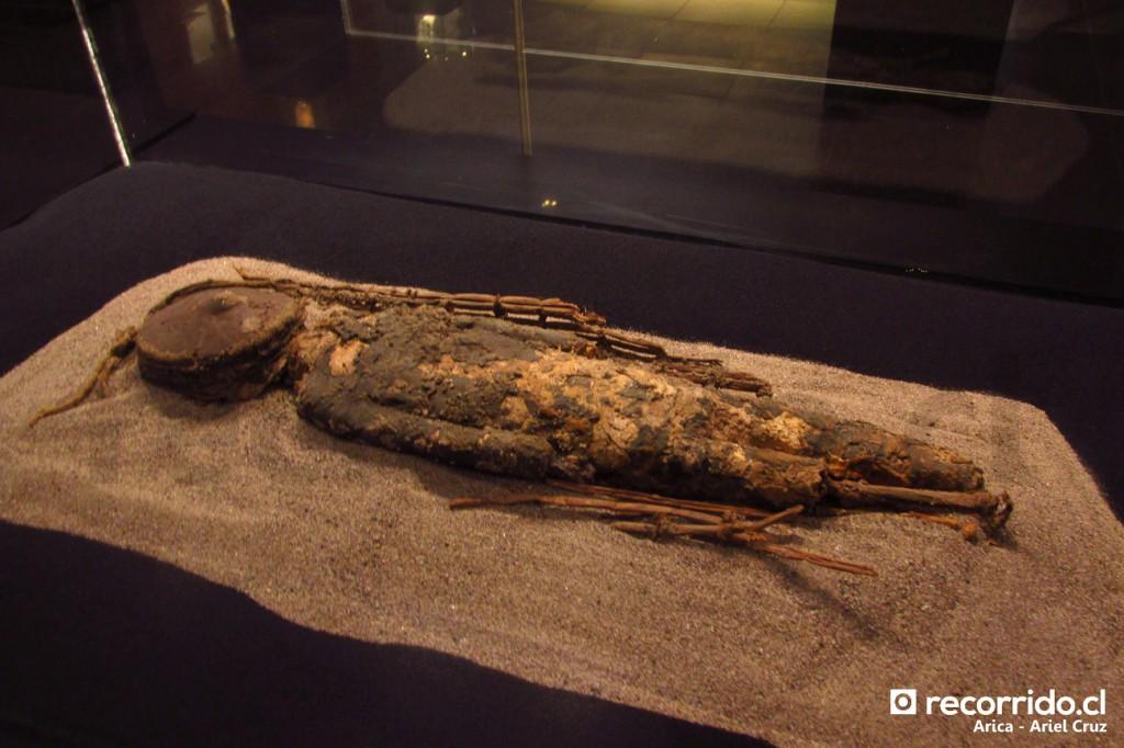 Momia Chinchorro en Museo Arqueológico San Miguel de Azapa