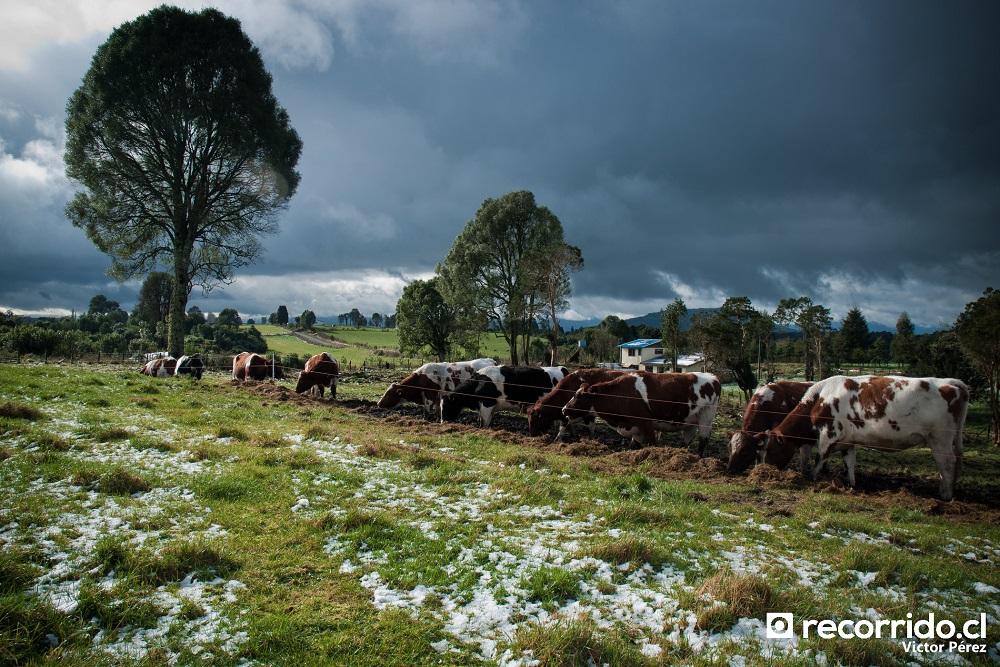 Cercanías de Osorno (Lago Rupanco)