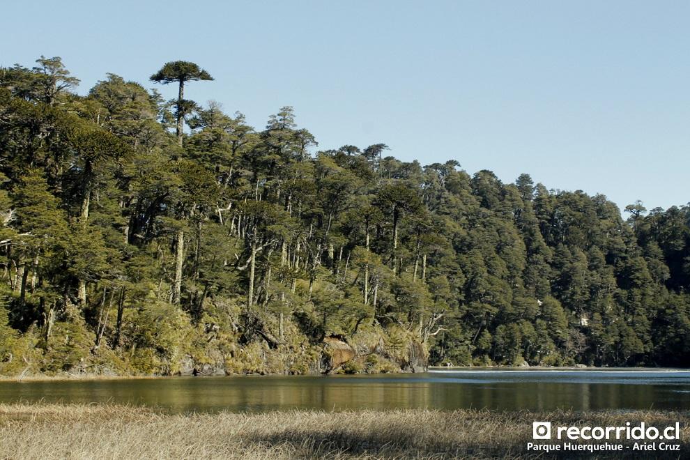 Los bosques y lagunas de Huerquehue son geniales
