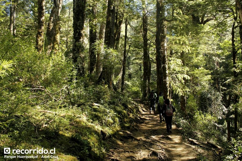 Bosque del Parque Huerquehue